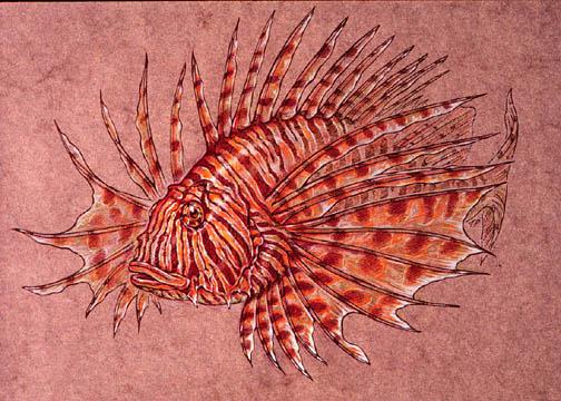 Image Of Lionfish Ilustration Figure 10 Analogous Colors